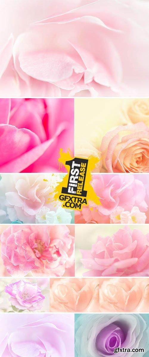 Stock Image Rose soft pink blur background