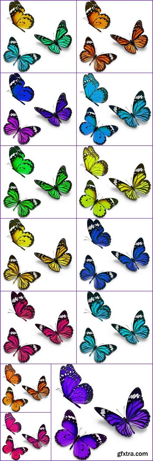 Butterfly -13 UHQ JPEG Stock Images