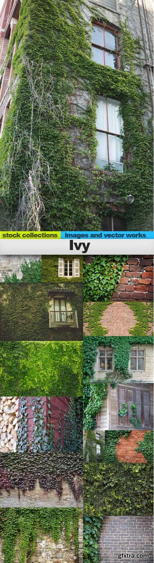Ivy, 15 x UHQ JPEG
