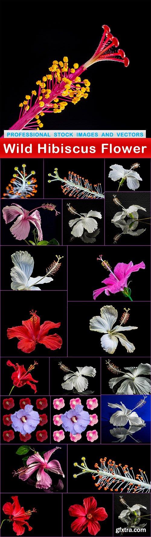 Wild Hibiscus Flower - 22 UHQ JPEG