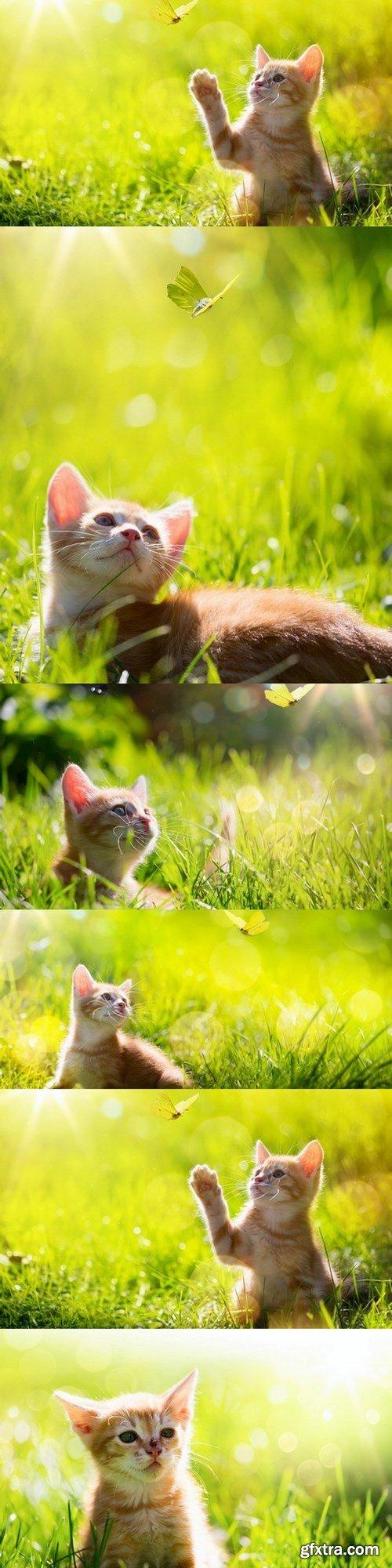 Kitten -6 UHQ JPEG