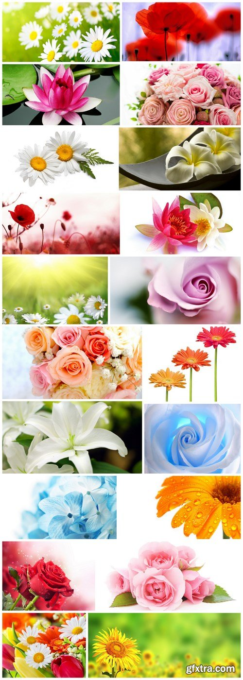 Beautiful Spring Flowers - 20 HQ Images