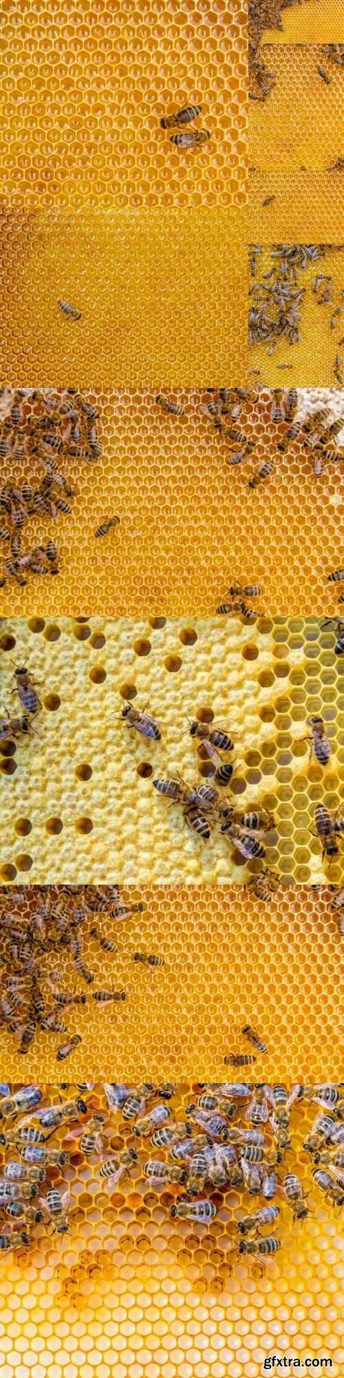 Bee honeycomb - 10 UHQ JPEG
