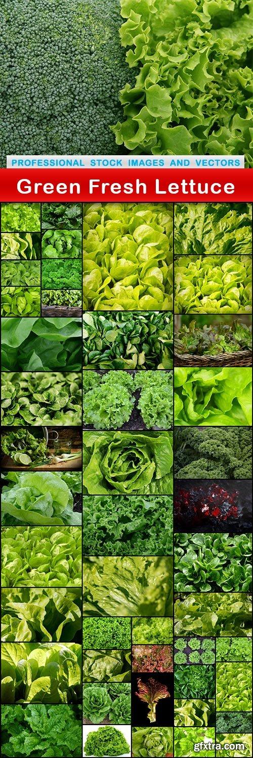 Green Fresh Lettuce - 47 UHQ JPEG