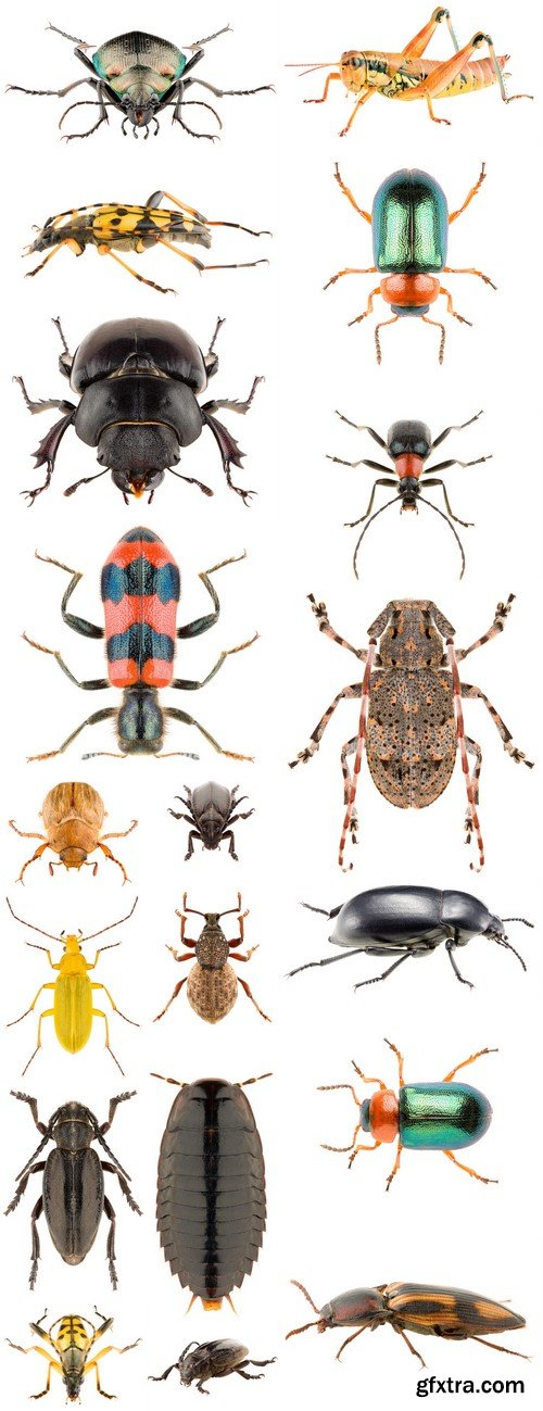 Beetles Insects on a white background 19X JPEG
