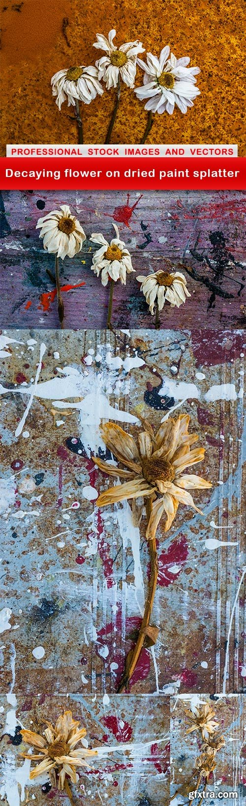 Decaying flower on dried paint splatter - 5 UHQ JPEG