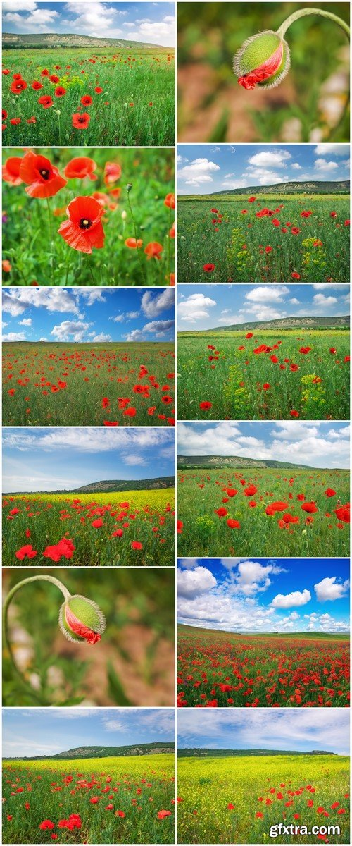 Beautiful Landscape Field with red poppies 12X JPEG