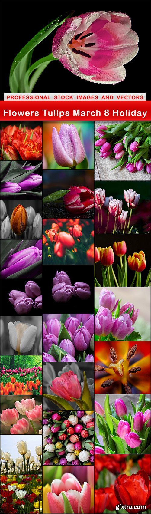 Flowers Tulips March 8 Holiday - 26 UHQ JPEG
