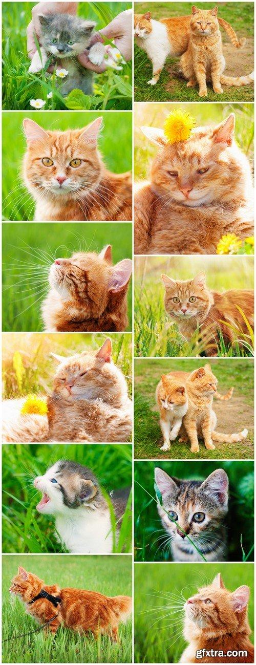 Cat redhead in the green grass in summer 12X JPEG