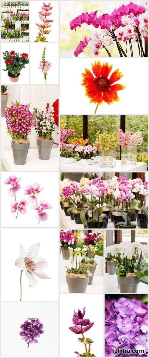 Flowers in pots, beautiful orchid 16X JPEG
