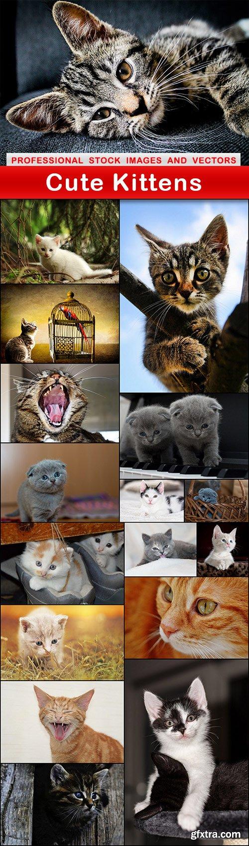 Cute Kittens - 17 UHQ JPEG