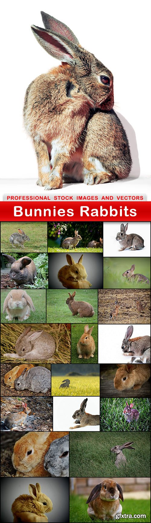 Bunnies Rabbits - 23 UHQ JPEG