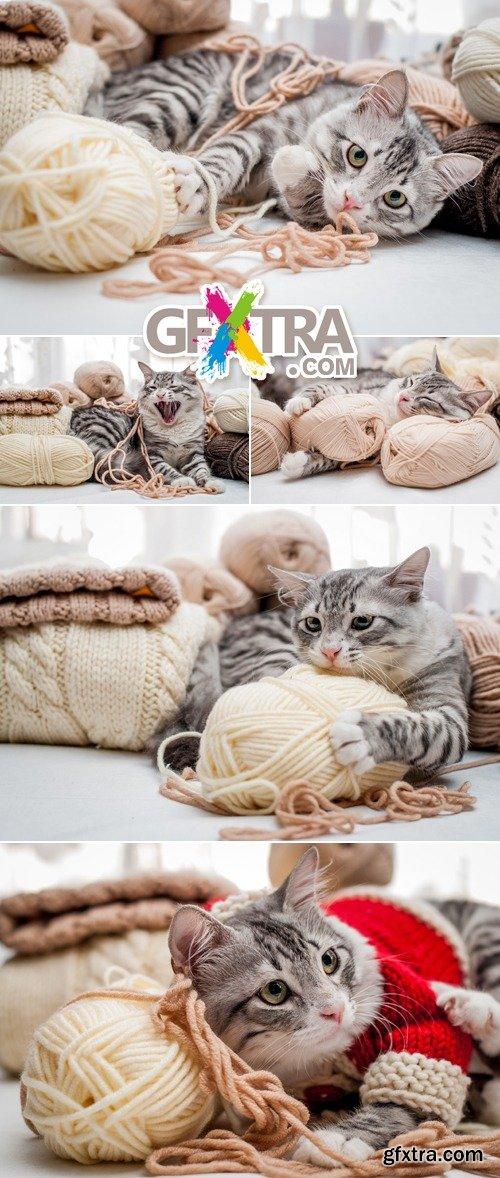 Stock Photo - Gray Cat