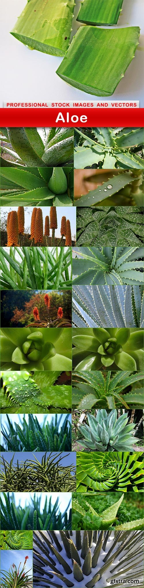 Aloe - 24 UHQ JPEG