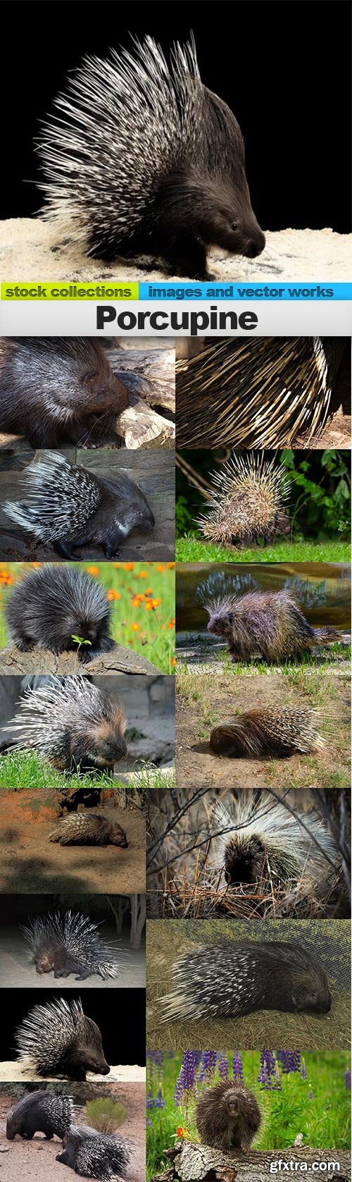Porcupine, 15 x UHQ JPEG