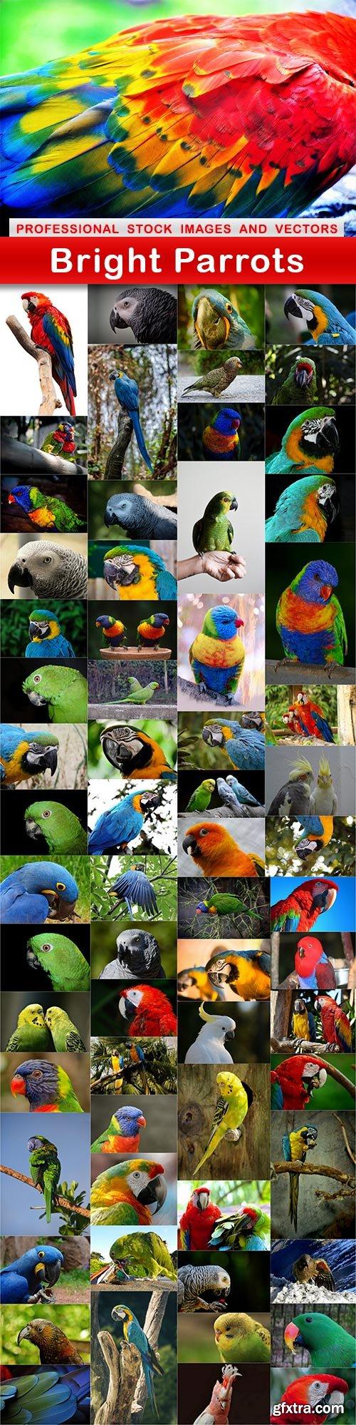 Bright Parrots - 65 UHQ JPEG