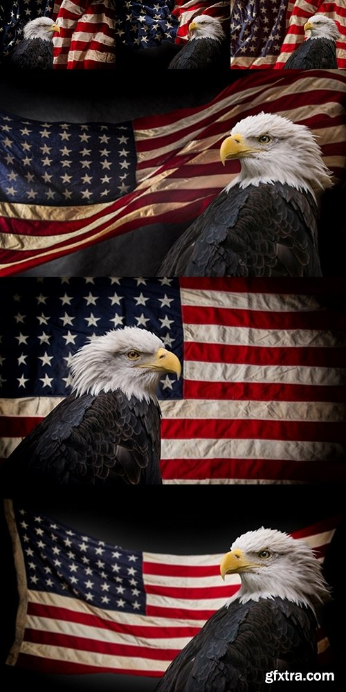 American Bald Eagle with Flag