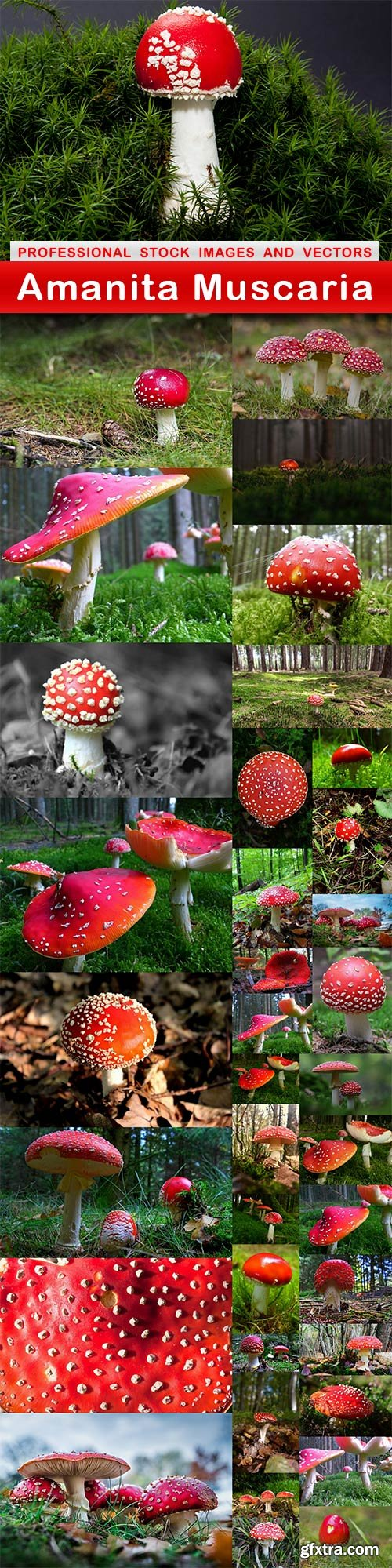 Amanita Muscaria - 45 UHQ JPEG
