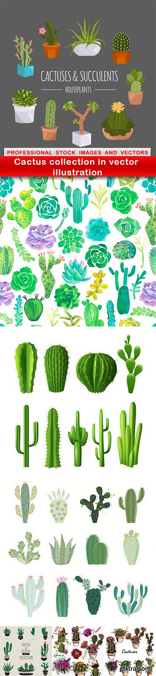 Cactus collection in vector illustration - 7 EPS