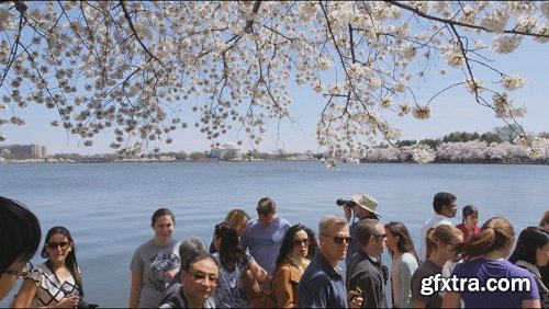 Panning shot of cherry blossom tree smooth body of water and people walking in multiple directions