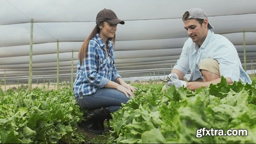 Young happy farming couple working with tools on there lettuce farm