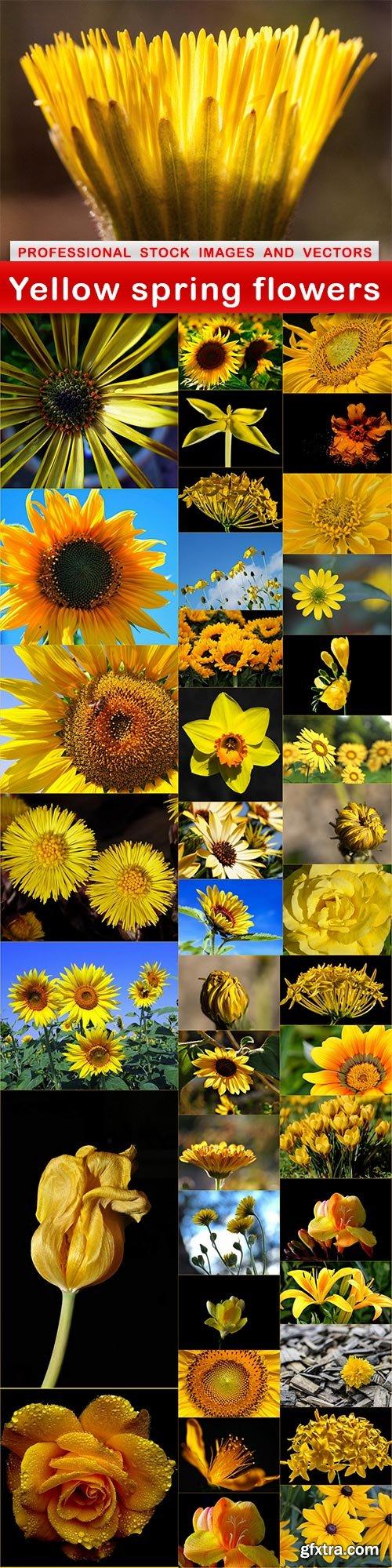 Yellow spring flowers - 40 UHQ JPEG