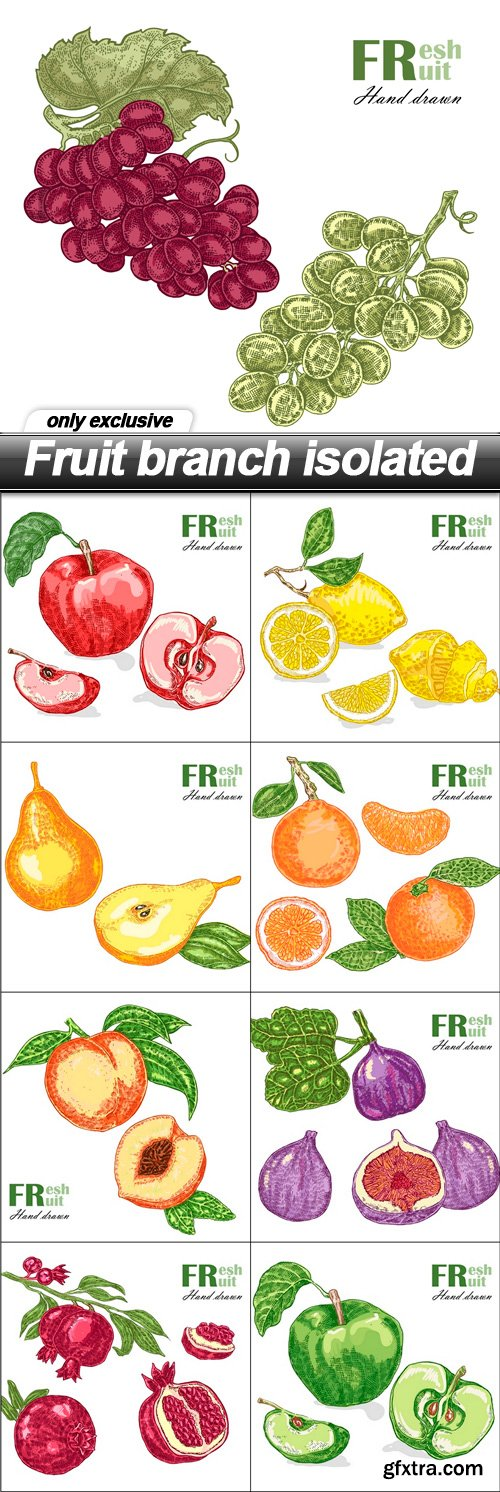 Fruit branch isolated - 9 EPS