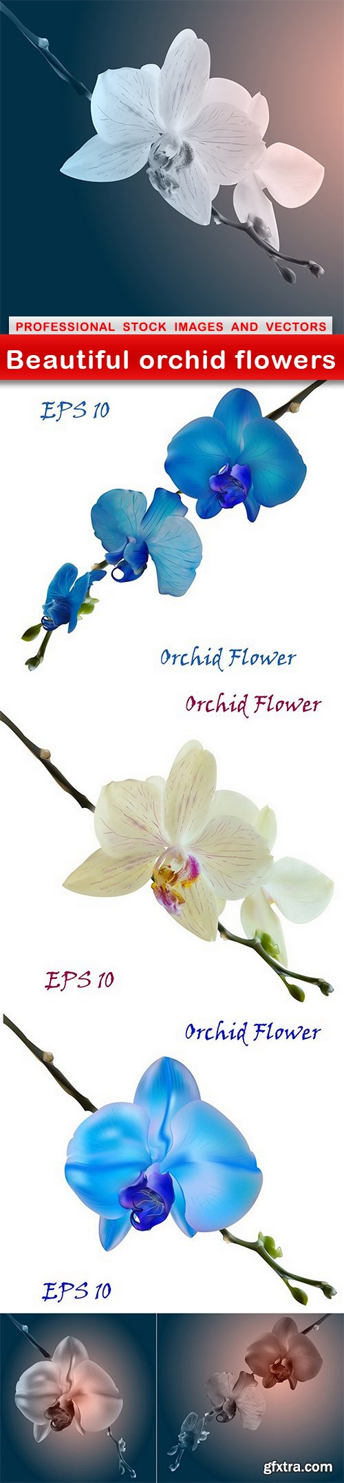 Beautiful orchid flowers - 6 EPS