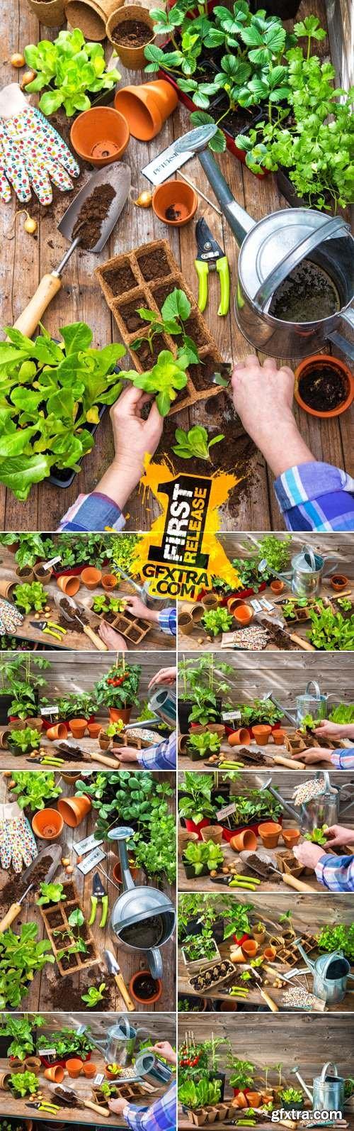 Stock Photo - Planting Seedlings
