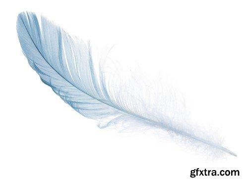 Pure white soft feather 8X JPEG