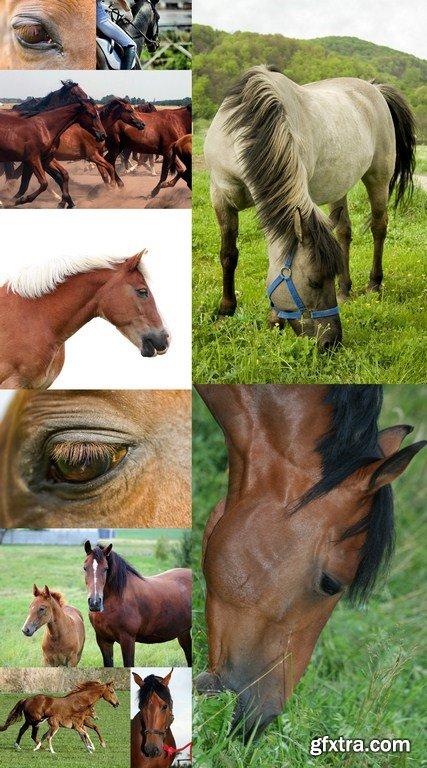 Beauty Horse - 10 x JPEGs