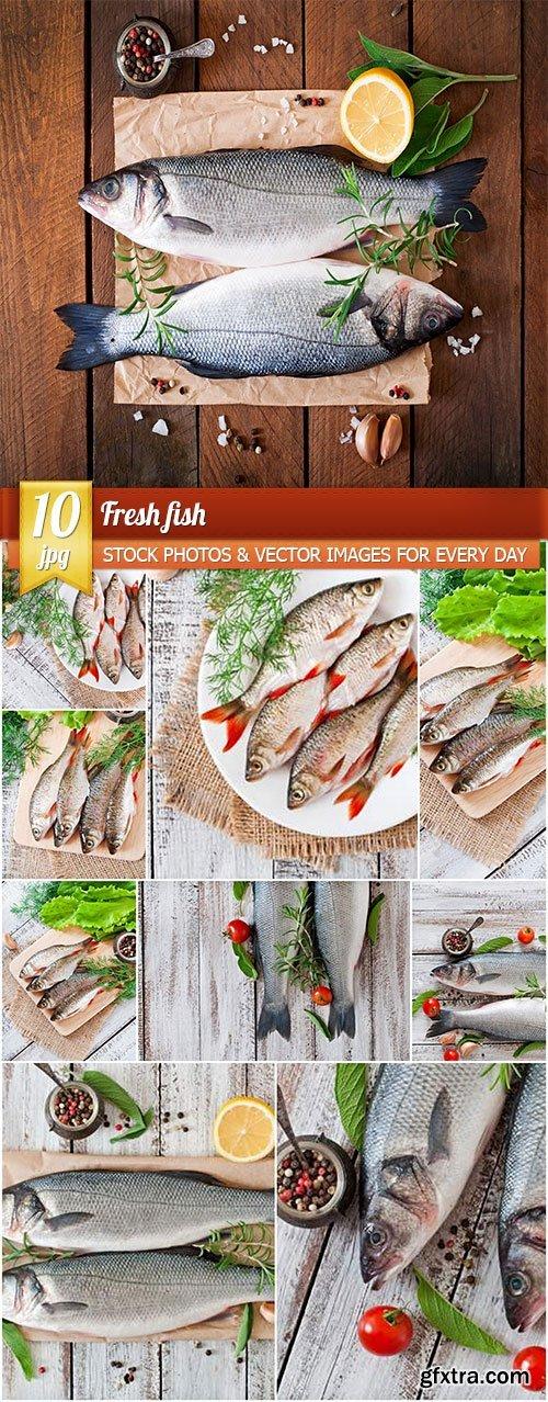 Fresh fish, 10 x UHQ JPEG