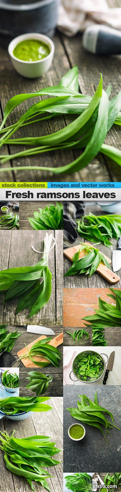 Fresh ramsons leaves, 15 x UHQ JPEG