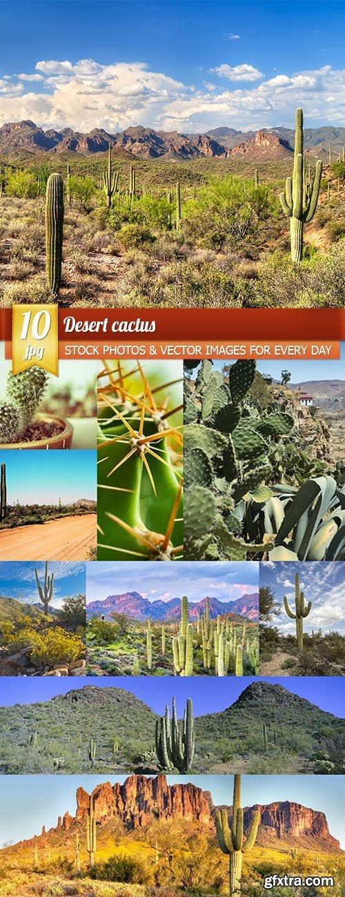 Desert cactus, 10 x UHQ JPEG