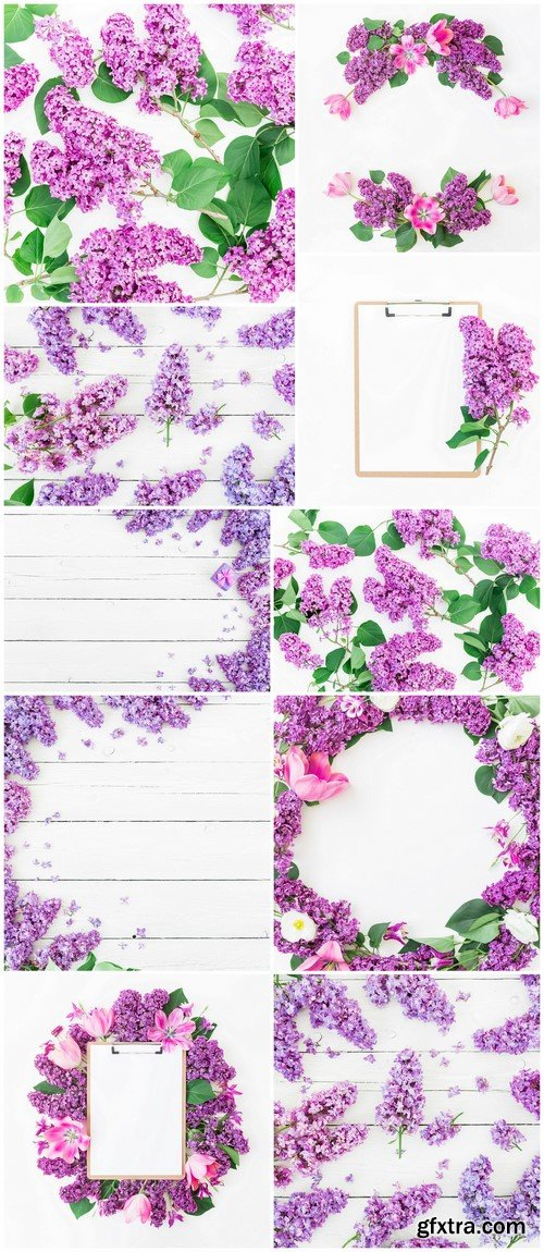 Lilac flowers on white background 10X JPEG