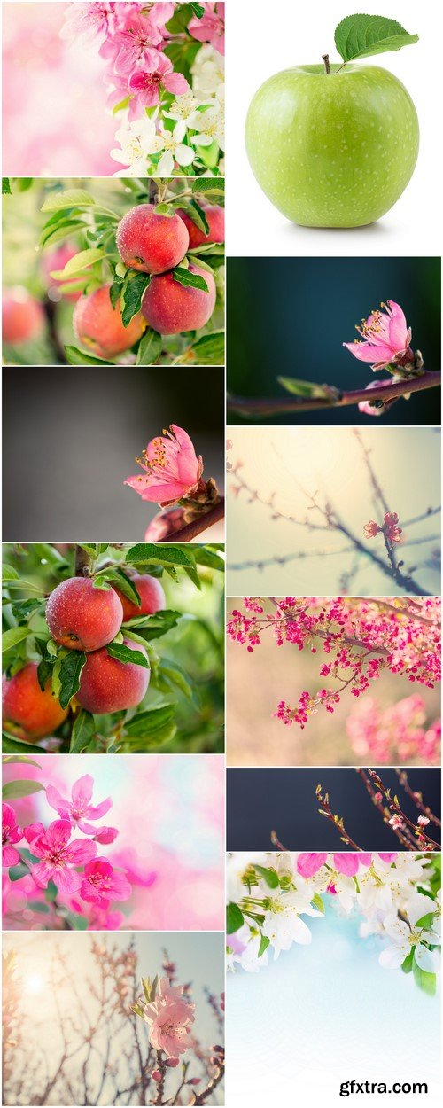 Spring background, flowers, apples 12X JPEG