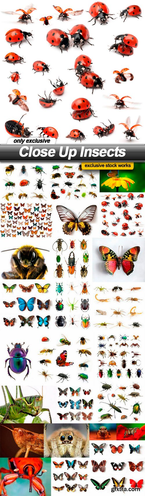 Close Up Insects - 25 UHQ JPEG