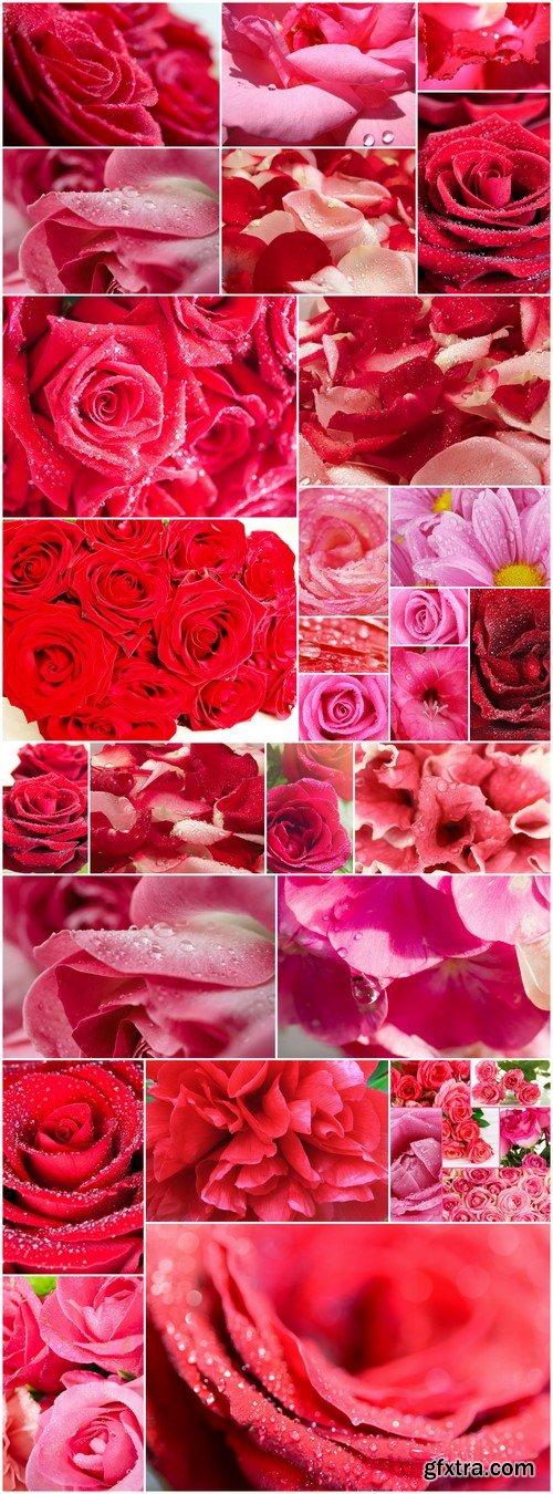 Beautiful Red Roses Petal Background 21X JPEG