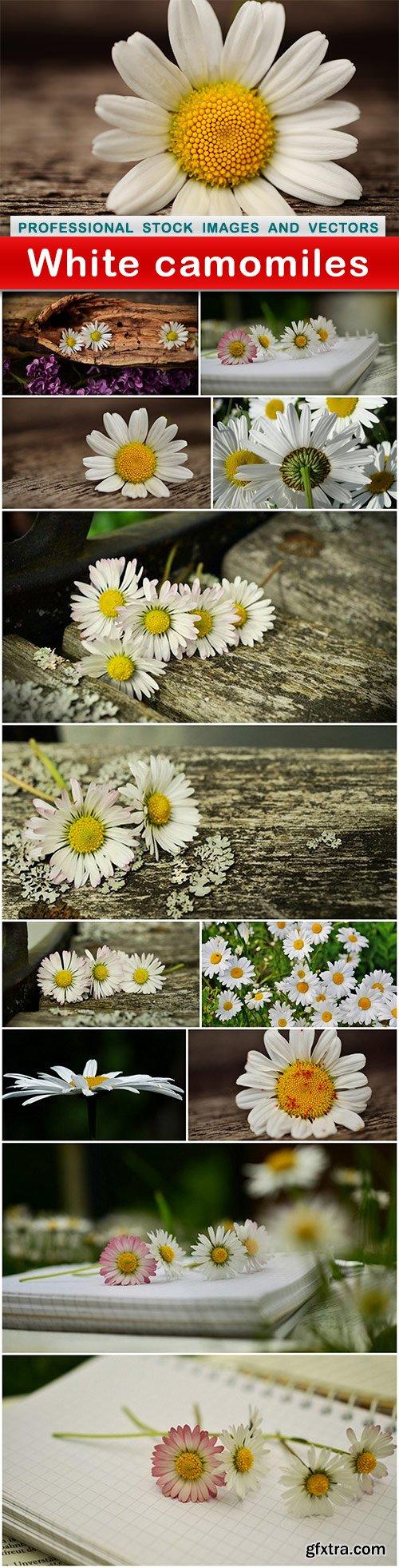 White camomiles - 13 UHQ JPEG
