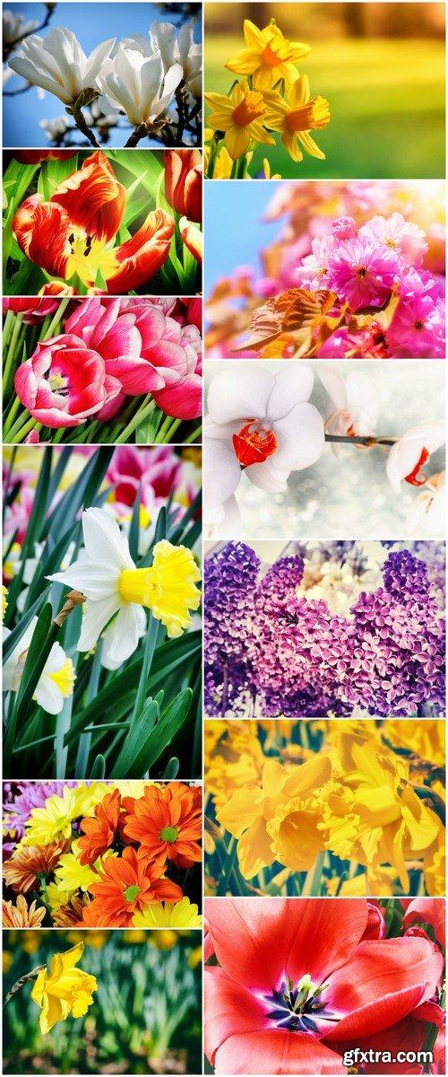 Multi Colored flowers close-up 12X JPEG