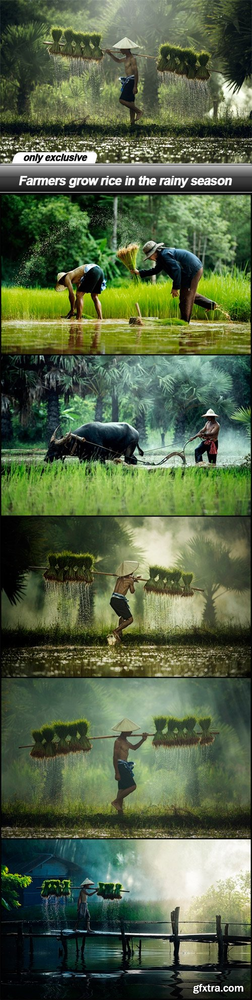 Farmers grow rice in the rainy season - 6 UHQ JPEG