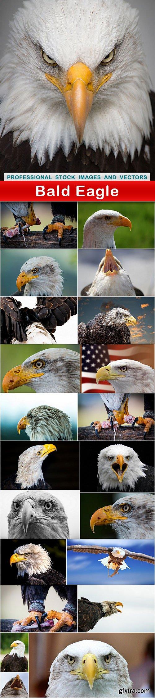 Bald Eagle - 22 UHQ JPEG
