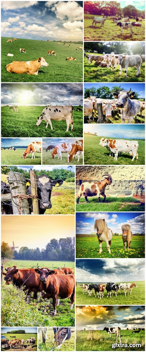 Agricultural landscape with herd of cows 16X JPEG