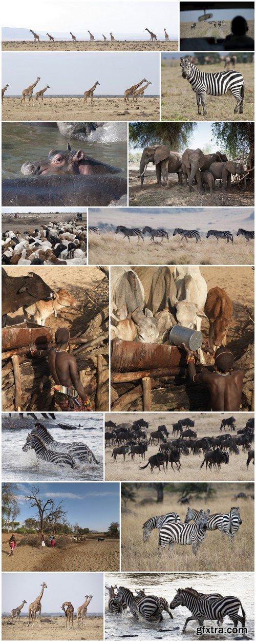 Kenya, Africa 16X JPEG