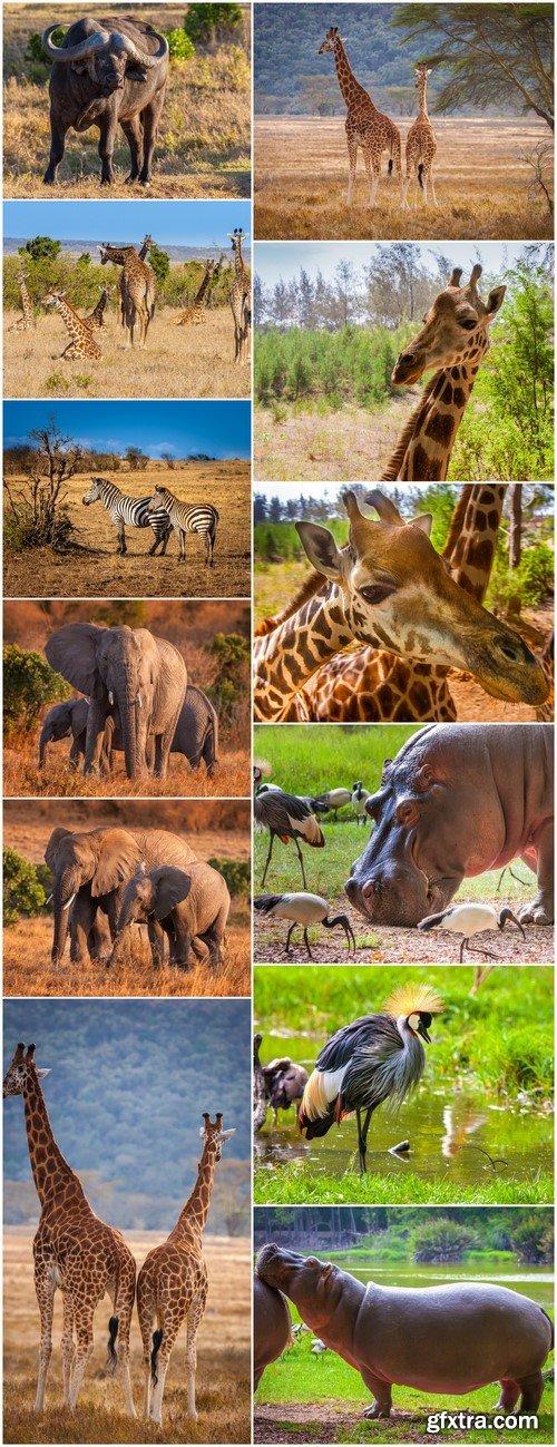 Kenya, Africa #2 12X JPEG