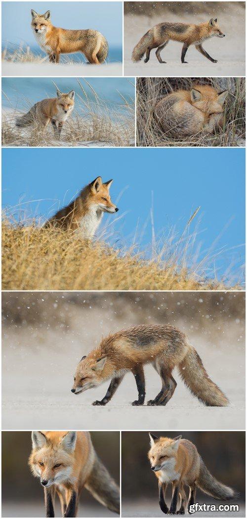 Fox 5X JPEG
