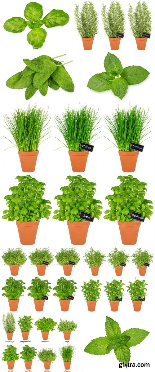 Different herbs in pots 12X JPEG