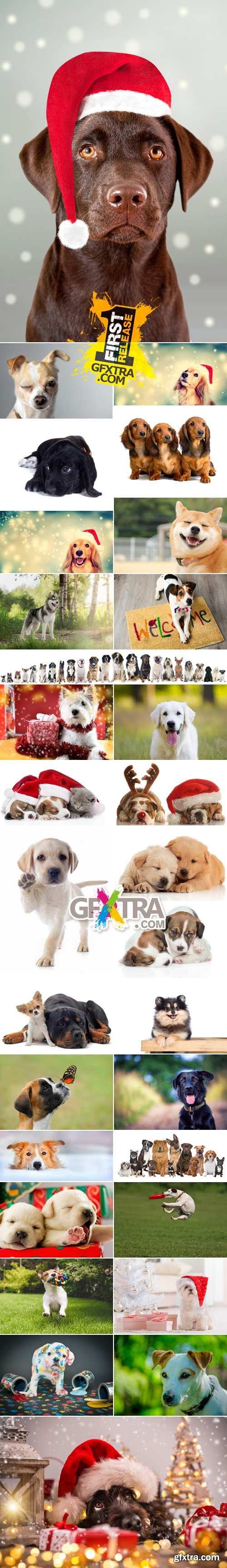 Stock Photo - Dog - Symbol of 2018 Year