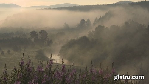 Misty River Valley In The Early Summer Morning Landscape