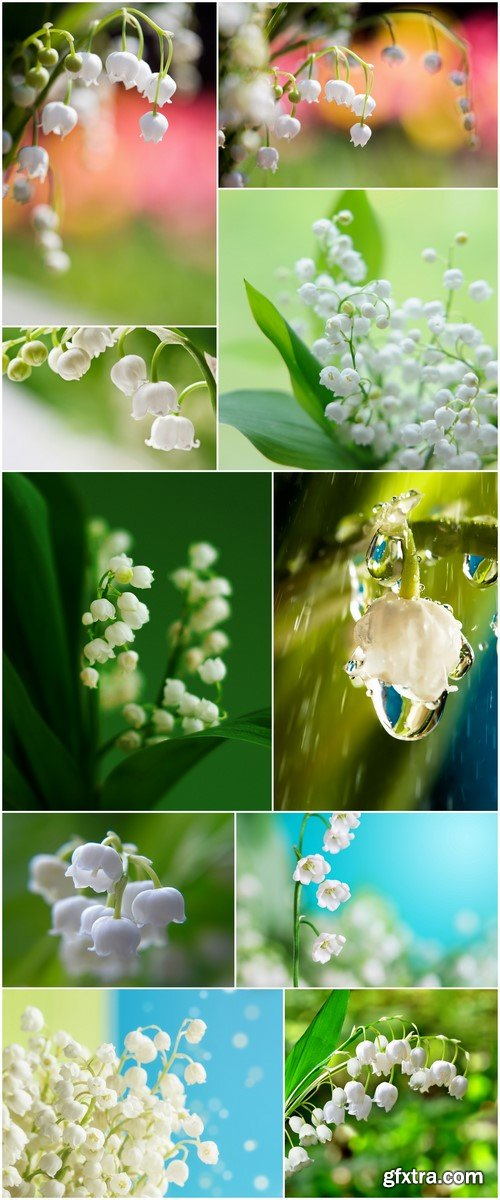 Lily of the valley #1